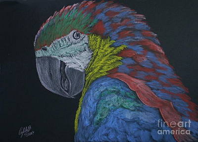 Wall Art - Pastel - Macaw by Cybele Chaves