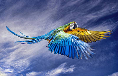 Superhero Ice Pops - Macaw Flying by Brian Tarr