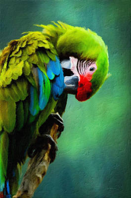 Macaw Mixed Media - Macaw Green Feather Preen by Georgiana Romanovna