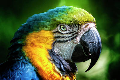 Food And Flowers Still Life - Macaw by Heather Allen