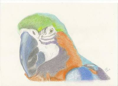 Macaw Drawing - Macaw by Jacqueline Essex