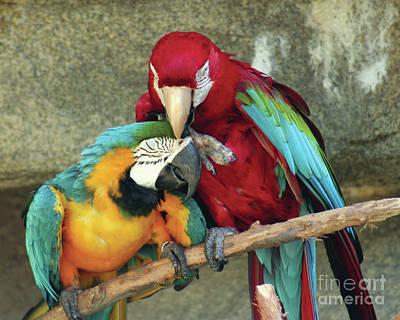 Photograph - Macaw Love by Alycia Christine