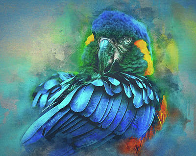 Macaw Magic Art Print
