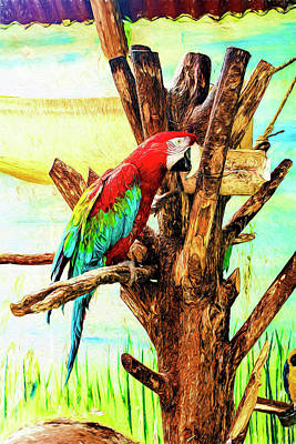 Photograph - Macaw by Maria Coulson