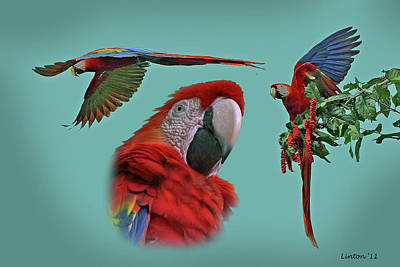 Macaw Photograph - Macaw Montage by Larry Linton