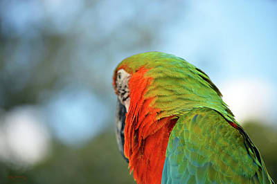 Country Photograph - Macaw Parrot Closeup 3 by Ken Figurski