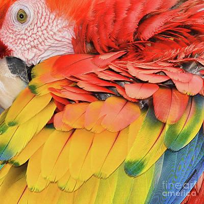 Photograph - Macaw Parrot  by Olga Hamilton