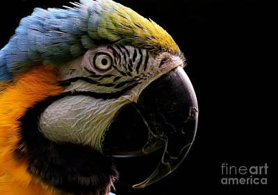 Photograph - Macaw Parrot Portrait by Sue Harper