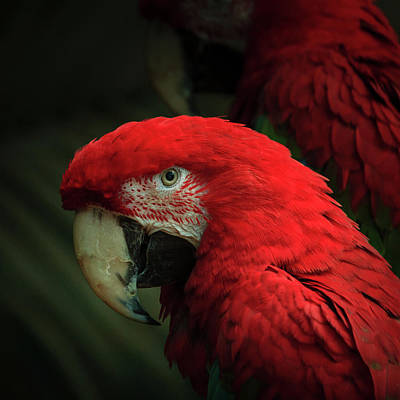Photograph - Macaw Portrait by Joni Eskridge