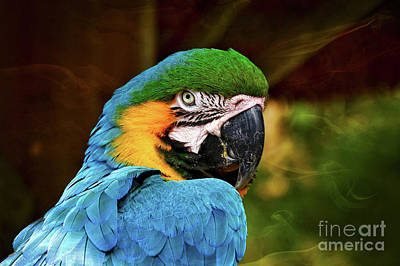 Photograph - Macaw Portrait by Kathy Baccari