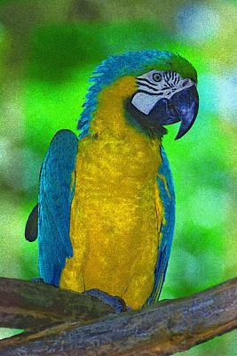 Digital Art - Macaw by Richard Nickson