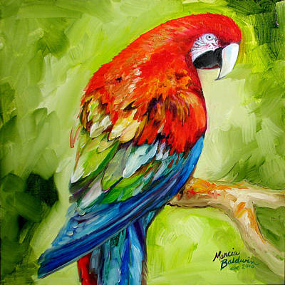 Painting - Macaw Tropical by Marcia Baldwin
