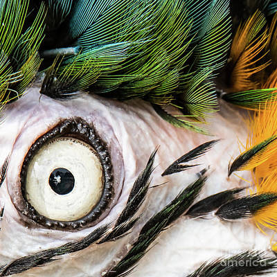 Macaw Up Close And Personal Art Print