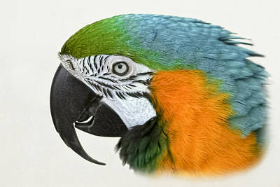 Photograph - Macaw by Wes and Dotty Weber