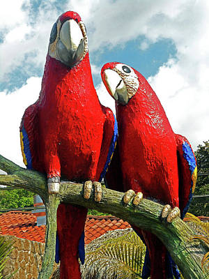 Photograph - Macaws 1 by Ron Kandt