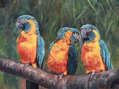 Macaw Painting - Macaws by David Stribbling