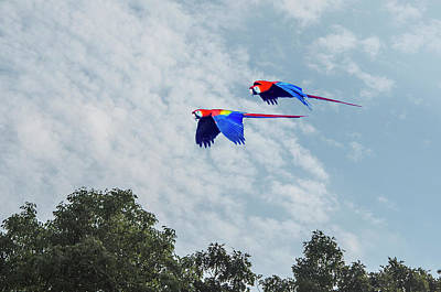 Photograph - Macaws Flying Over Trees by William Bitman