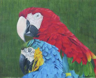 Macaw Drawing - Macaws by Jenny Andreoli