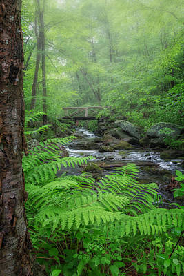 Macedonia Brook State Park Portrait Art Print by Bill Wakeley