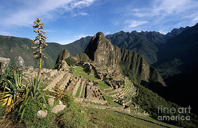 Machu Picchu And Bromeliad Art Print by James Brunker
