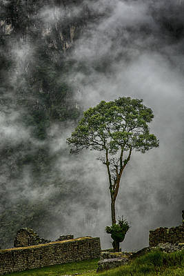 Photograph - Machu Picchu Sentinel by John Haldane