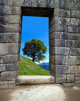 Stone Masons Photograph - Machu Pichu Tree by Daniel Hagerman