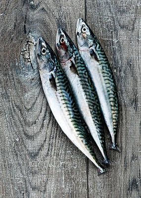 Food And Drink Photograph - Mackerel by Carlo A