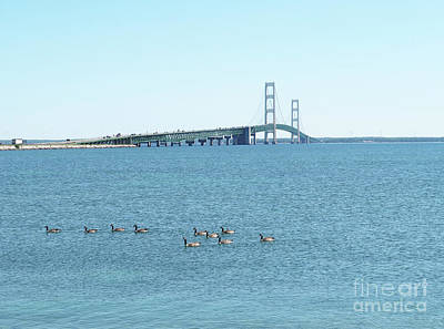 Photograph - Mackinac Bridge And Geese by Ann Horn