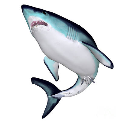 Sharks Painting - Maco Shark by Corey Ford