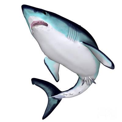 Maco Shark Art Print by Corey Ford