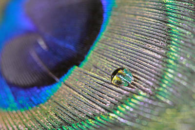 Photograph - Macro Feather by Angela Murdock