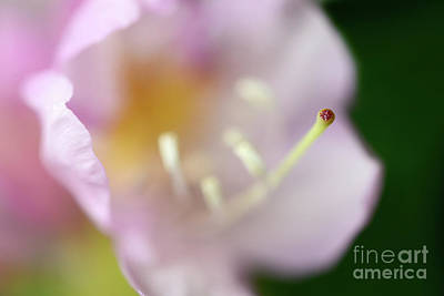 Photograph - Macro Flower Magic by Terry Elniski