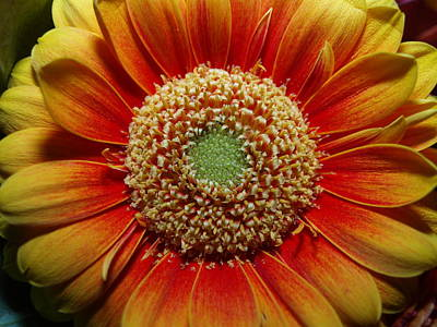 Photograph - Macro Flower by Michael Canning