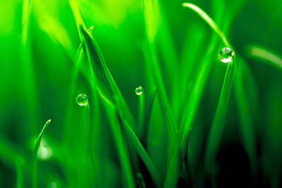 Macro Image Of Fresh Green Grass Art Print by John Williams