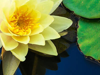 Macro Image Of Yellow Water Lilly Art Print by John Williams