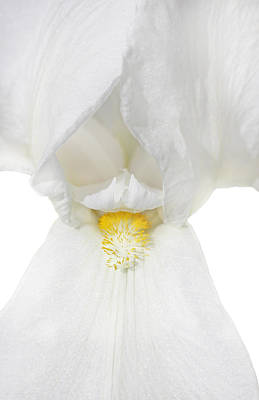 Photograph - Macro Iris Flower White by Jennie Marie Schell