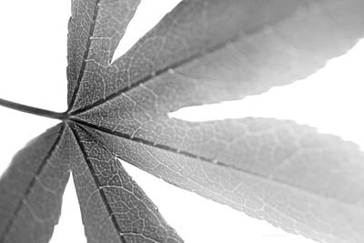 Photograph - Macro Leaf  Black And White by Jennie Marie Schell