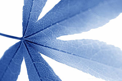 Photograph - Macro Leaf  Blue by Jennie Marie Schell