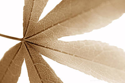 Photograph - Macro Leaf  Brown by Jennie Marie Schell