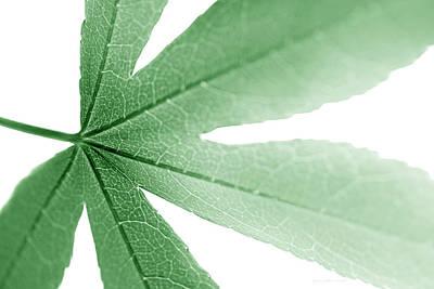 Katharine Hepburn - Macro Leaf Green by Jennie Marie Schell