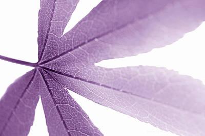 Photograph - Macro Leaf Plum by Jennie Marie Schell