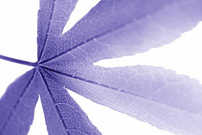 Photograph - Macro Leaf Purple by Jennie Marie Schell