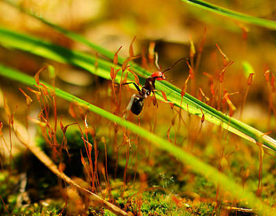 Forest Floor Photograph - Macro Of An Ant by Jeff Swan
