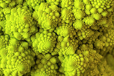 Macro Of Head Of Broccoli Romanesco Art Print by Teri Virbickis