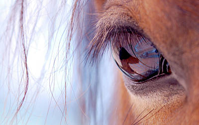 Macro Of Horse Eye Art Print by Anne Louise MacDonald of Hug a Horse Farm