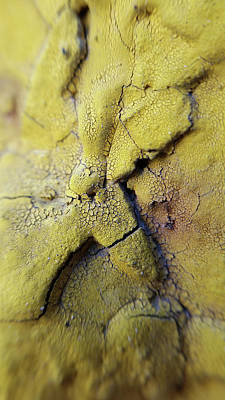 Photograph - Macro Paint 1 by Zac AlleyWalker Lowing