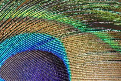 Photograph - Macro Peacock Feather by Angela Murdock