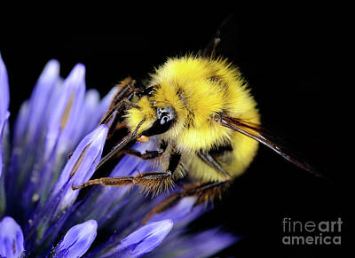 Photograph - Macro Photography - Bees 1 by Terry Elniski