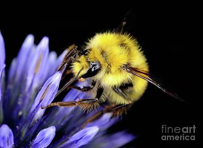 Photograph - Macro Photography - Bees 1 by Terry Elniski