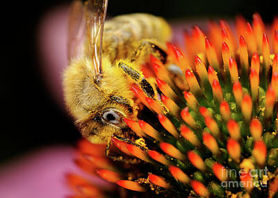 Photograph - Macro Photography - Bees - 10 by Terry Elniski